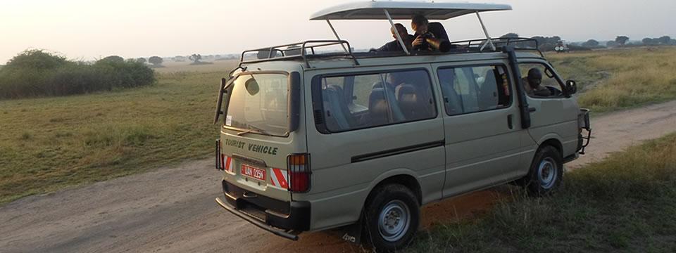 safari-omnibus